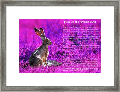 Year Of The Rabbit 2011 . Magenta Framed Print by Wingsdomain Art and Photography