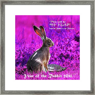 Year Of The Rabbit 2011 . Square Magenta Framed Print by Wingsdomain Art and Photography
