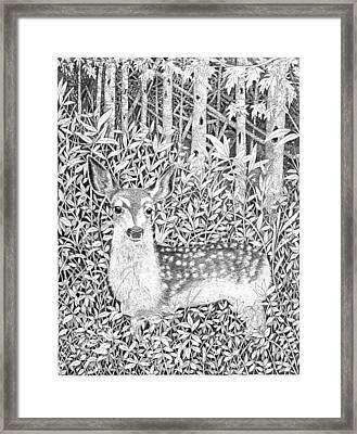 Yearling Framed Print