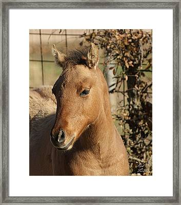 Framed Print featuring the photograph Yearling by Rick Friedle