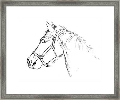 Yearling White Framed Print by JAMART Photography