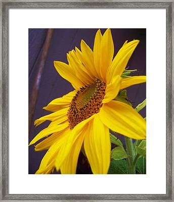 Yearning For Sunshine Framed Print