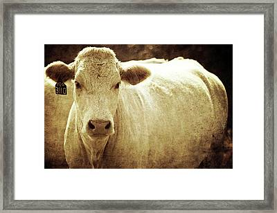 Framed Print featuring the photograph Yeg 3110 by Trish Mistric