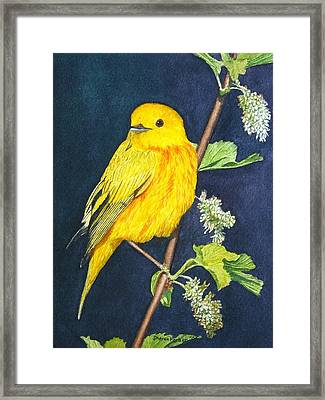 Yelllow Warbler Framed Print by Sharon Farber