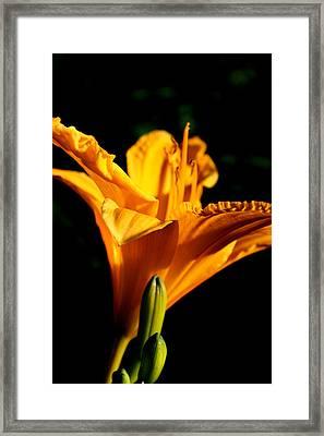 Yellow Framed Print by Alexandra Harrell