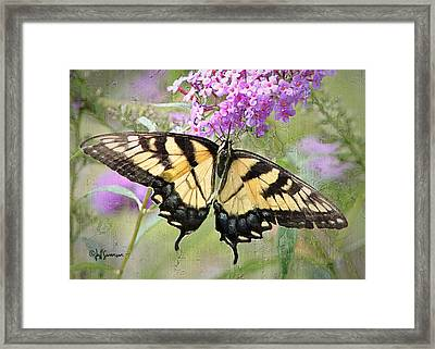 Yellow And Black Beauty Framed Print