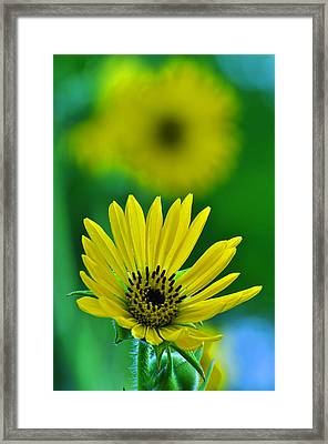 Yellow And Green 3 Framed Print by Peter  McIntosh