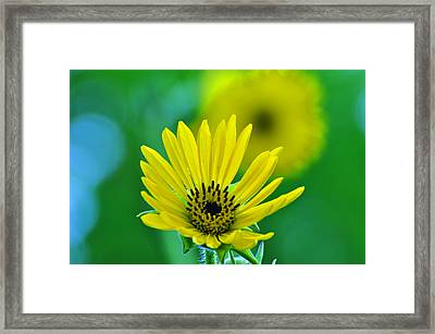 Yellow And Green Framed Print by Peter  McIntosh