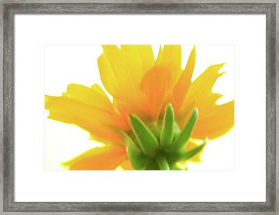 Framed Print featuring the photograph Yellow And Green by Roger Mullenhour