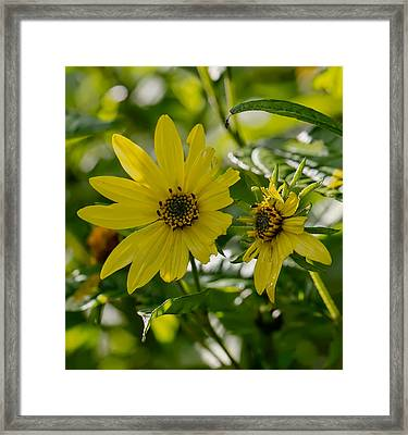 Yellow And Green Tones Framed Print by Leif Sohlman