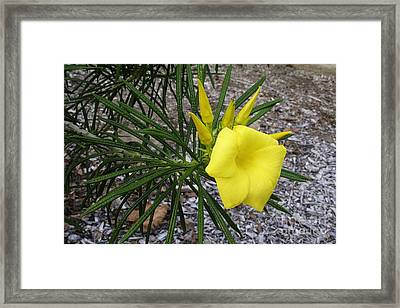Framed Print featuring the photograph Yellow And Green by Viktor Savchenko