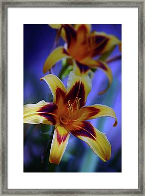 Yellow And Orange And Garnet Daylilies 1270 H_2 Framed Print