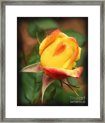 Framed Print featuring the painting Yellow And Orange Rosebud by Smilin Eyes  Treasures