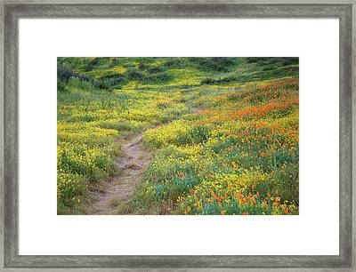 Framed Print featuring the photograph Yellow And Orange Wildflowers Along Trail Near Diamond Lake by Jetson Nguyen