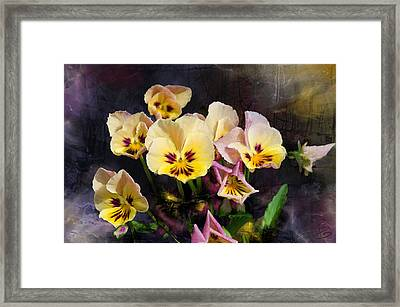 Yellow And Pink Pansies Framed Print