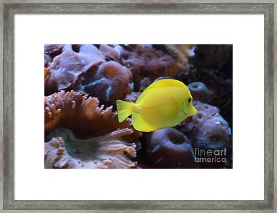 Yellow And Proud  Framed Print