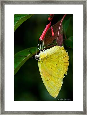 Yellow And Red Framed Print by Don Durfee