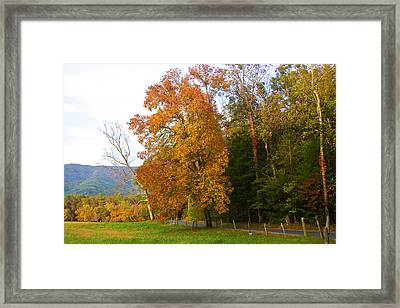 Framed Print featuring the photograph Yellow And Red Tree by Bob Decker