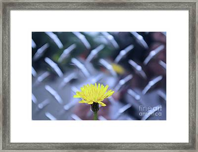 Yellow And Silver Framed Print