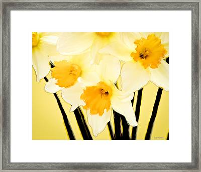 Yellow And White Daffodils. Framed Print
