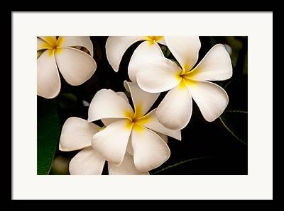 Tropical Flowers Of Hawaii Framed Prints