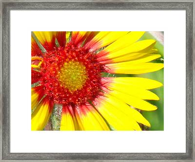 Yellow Framed Print by Angela Christine