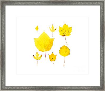 Yellow Autumn Leaves Framed Print by Jennifer Booher