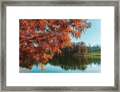 Yellow Autumn Tree On Lake Water With Reflection Background Framed Print by Radu Bercan