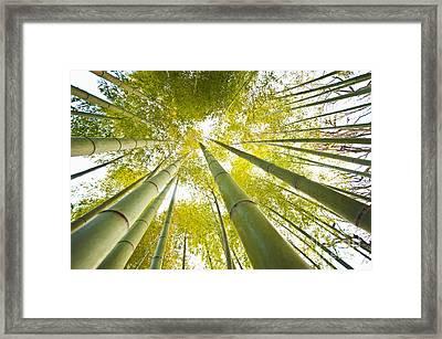 Yellow Bamboo Framed Print by Bill Brennan - Printscapes