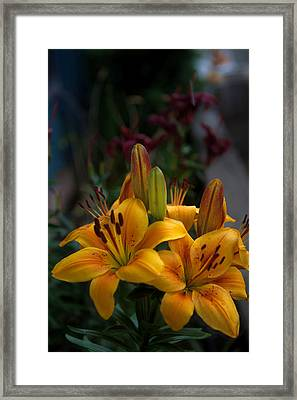 Framed Print featuring the photograph Yellow Beauties by Cherie Duran