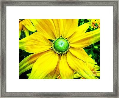 Yellow Beauty Framed Print by Alina Davis