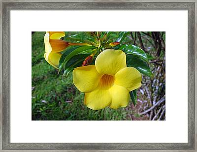 Yellow Beauty Framed Print by Gary Wonning
