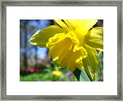 Framed Print featuring the photograph Yellow Beauty by Maciek Froncisz