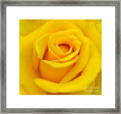 Yellow Beauty Framed Print by Mg Blackstock