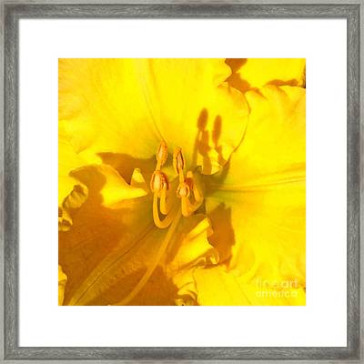 Yellow Beauty Framed Print by Tierong Fu