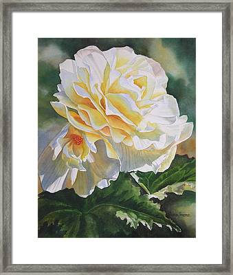 Yellow Begonia With Bud Framed Print by Sharon Freeman