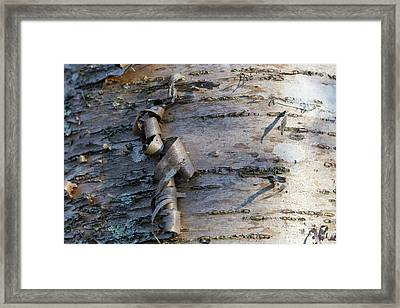Framed Print featuring the photograph Yellow Birch Details by Andrew Pacheco