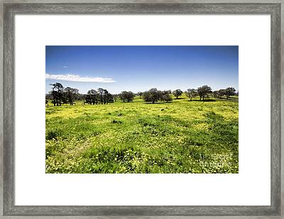 Framed Print featuring the photograph Yellow Blanket by Douglas Barnard