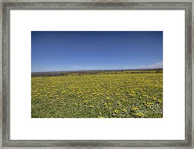 Framed Print featuring the photograph Yellow Blanket II by Douglas Barnard