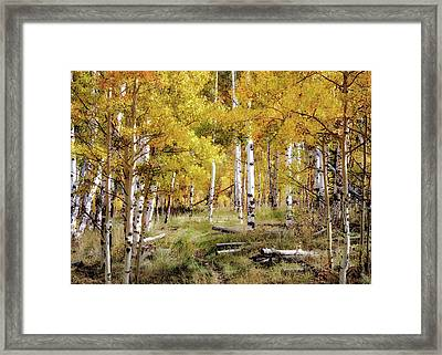 Yellow Bliss Framed Print