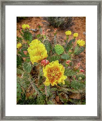 Yellow Bloom Framed Print