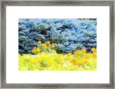 Yellow, Blue, Orange Framed Print