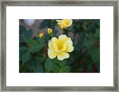 Yellow Framed Print by Bret Worrell