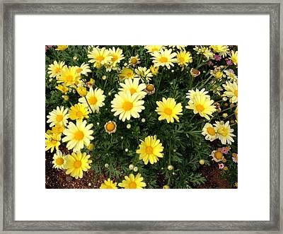 Yellow Buds Framed Print