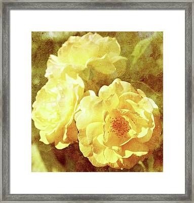 Yellow Bunch Vintage Framed Print by Cathie Tyler