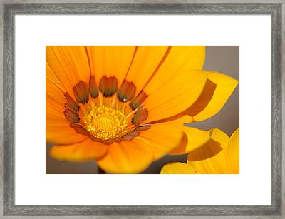 Yellow Burst Framed Print