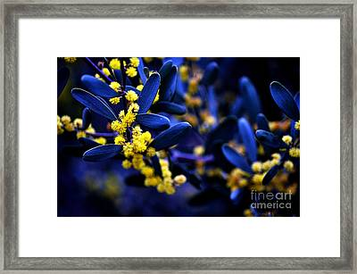 Yellow Bursts In Blue Field Framed Print