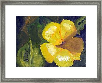 Yellow Buttercup  Framed Print by Maria Soto Robbins