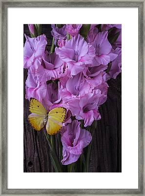 Yellow Butterfly On Pink Glads Framed Print by Garry Gay