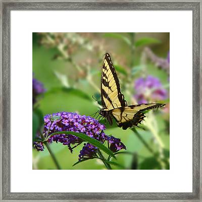 Yellow Butterfly On Purple Framed Print